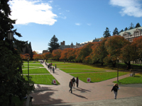 University of Washington Quad and Cherry Trees, Oct 2007